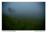 Dans le brouillard ...