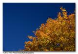 Fall colors ...