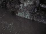 SCHEGGIA idro.jpg