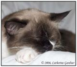 Cuddles Mar 17th 1998 - Aug 15th 2008