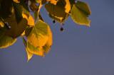 Minnesota Autumn  ~  September 15