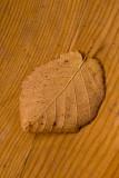 Fallen Leaf  ~  October 10