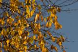 Autumn Skies  ~  October 16