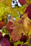 Fall Color  ~  November 5