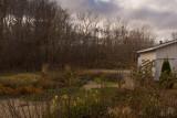 Autumn Garden  ~  November 14