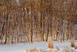 Winter Amongst the Trees  ~  December 18