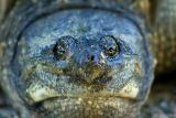 Turtle Closeup  ~  June 2  [10]