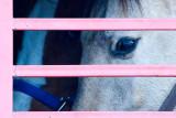 Horse Sense  ~  March 2
