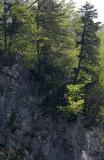 Bäume im Langgüetli