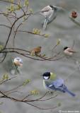 Vögel im Langgüetli (Collage)