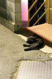 streetcats.JPG