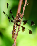 dragonfly 2006_0716Image0039.jpg