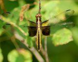 dragonfly 2006_0716Image0032.jpg