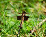 dragonfly 2006_0716Image0006.jpg