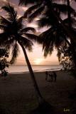 La grande anse Salines (Martinique)