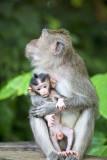 Des singes de Bali