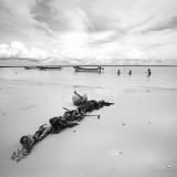 Iguana Island swimmers