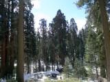 Trip to the Sequoias & Redwoods 3/2/08