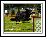 Dog Agility -Starter Jumper 1
