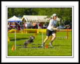 Dog Agility - Steeplechase 2