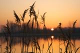 Sunrise, Grass, Pond