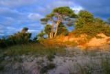 Pinery Shore