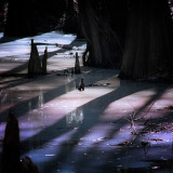 Swamp Backwater #1