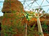 Desert Dome