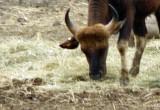 Herd Animal