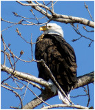 squaw_creek_national_wildlife_refuge_