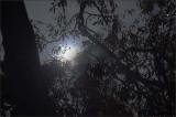 Moonlight - 6