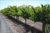 Challenge - V for vines - December 22