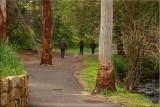 Walking the dog - 1