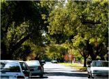 Street scene in suburbia in autumn