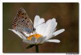 Canon_EOS_5D_Mark_II_20090719_142405_IMG_3341.jpg