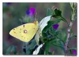 Canon_EOS_450D_20090721_201352_IMG_9351.jpg