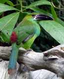Beak Bird