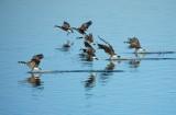 Goose Landing Strip