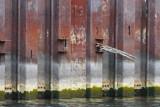 Shipyards Drydock Water Level - Sept 29, 2012 @ 1530
