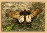 Butterfly-Conservatory-01