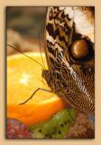 Butterfly-Conservatory-05