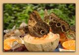 Butterfly-Conservatory-10