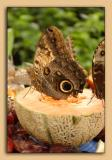 Butterfly-Conservatory-12