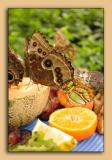 Butterfly-Conservatory-13