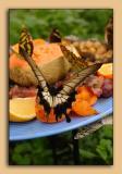 Butterfly-Conservatory-16