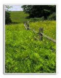 Spring-At-Knox-Farm-55