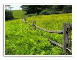 Spring-At-Knox-Farm-57