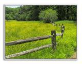 Spring-At-Knox-Farm-60
