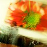 December 8 2008:  Flower Blur