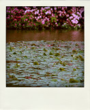 May 18 2009: The Lily Pond